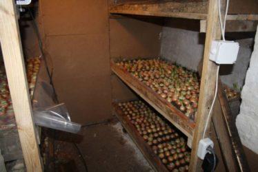 Что можно производить в подвале частного дома?